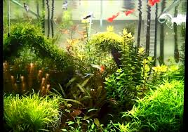 Aquascape Design Layout Creating A 29 Gallon Freshwater Aquascape Some Design Tips