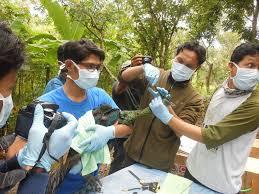 merak hijau morfometri merak hijau di wildlife rescue center www uny ac id