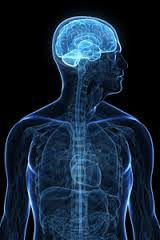 Part Of Brain That Controls Arousal The Brain And Nervous System In Psychology 101 At Allpsych Online