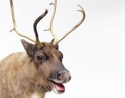 donner donder or dunder santa u0027s reindeer names explained