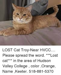 Lost Cat Meme - lost cat troy near hvcc please spread the word lost cat in the