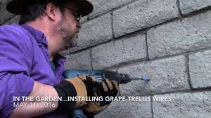 in the garden may 11 2016 installing grape trellis wires youtube