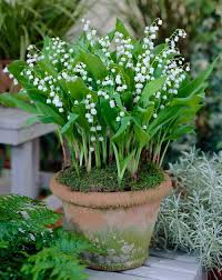 The Most Fragrant Plants - fragrant flowers for homegrown bouquets