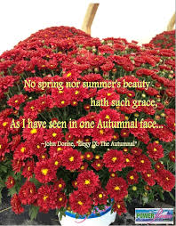 power flowers quotes for the fall garden