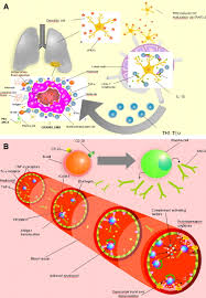 anti neutrophil cytoplasmic antibody pathogenesis in small vessel