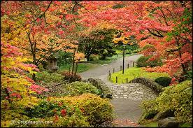 Botanical Gardens Seattle Seattle Area Japanese Gardens In Autumn Wanders Wonders