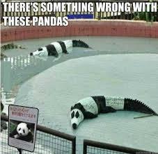 Funny Panda Memes - panda meme