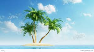 growing palm trees on island at sea stock animation 737677