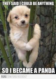 Hipster Dog Meme - family drama meme google search stuff to buy pinterest