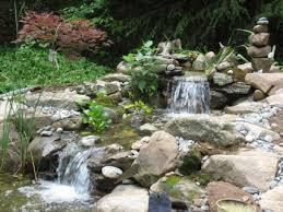 ornamental backyard water garden algae bloom vs chemicals water