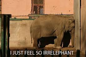 Funny Sad Meme - funny sad elephant crying kissinbluekaren