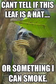Funny Sloths Memes - stoner sloth memes quickmeme