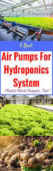 Best Plants For Air Quality by 5 Best Air Pumps 2017 For Hydroponics System Plants Need Oxygen Too