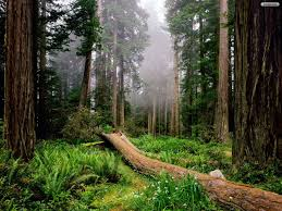 forest wallpapers 27