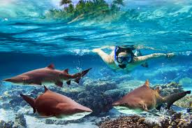 Massachusetts snorkeling images Top snorkel reefs in the us jpg
