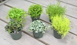 mini plants easy mini house plants interesting hanging house plants best indoor