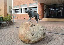 Bench Kelpie Puppies Sale Australian Kelpie Wikipedia