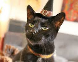 Cat Halloween Costumes Cats Cat Costume Witch Hat Hissy Witch Cat Halloween Costume