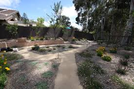 native drought tolerant plants landscaping to save water u0026 money photo gallery kpbs