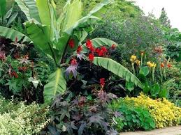 Tropical Landscaping Ideas by Tropical Landscaping Ideas U2013 Bowhuntingsupershow Com