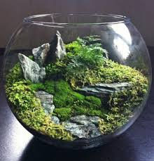 asian style terrarium gardening a beautiful terrarium gardening