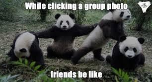 Panda Meme - these panda memes are little bomb of cuteness and laughter