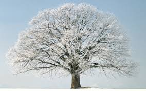 snow tree winter wallpaper 1680x1050 31797