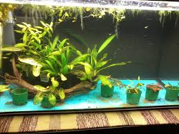 Substrate Aquascape Can I Add Fluval Stratum Substrate Without Draining The Tank First