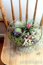 salad bowl terrarium project garden therapy