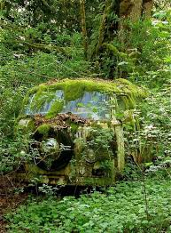 vw schwimmwagen found in forest 489 best vw images on pinterest antique cars vw beetles and vw bugs