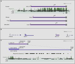 lincrnas genomics evolution and mechanisms cell