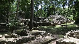 imagenes mayas hd ruins of structures amidst trees at the maya site in copan honduras