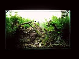 101 best small size images on pinterest aquascaping aquarium