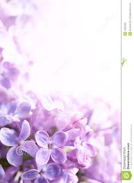 Lilac Flower by Art Spring Lilac Abstract Background Stock Photo Image 24682550