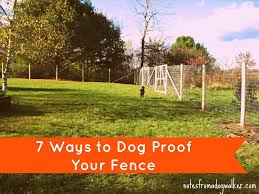 Fun Backyard Landscaping Ideas Fun Backyard Ideas For Dogs Backyard Fence Ideas