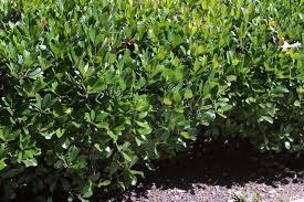 download types of landscaping garden design