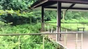 bird sounds at singapore quarry lake area youtube