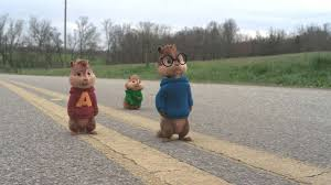 chipmunks exceeded their expectancy houston chronicle