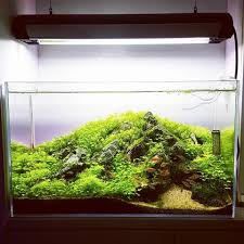 Aga Aquascape Marcus Spaull Marcusspaull Instagram Photos And Videos