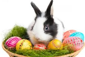 easter bunny 7 things you never knew about the easter bunny