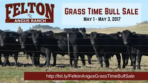felton angus ranch grass time bull sale may 1 may 3 2017 youtube