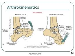 Foot Ligament Anatomy 1 Biomechanics Of Ankle Joint Subtalar Joint And Foot