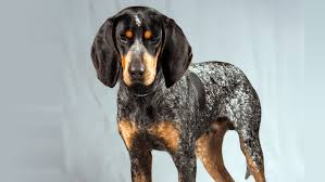 bluetick coonhound florida painting a bluetick hound part 1 mike pounders woodcarving