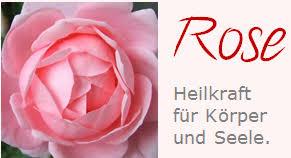 10 hochzeitstag rosenhochzeit rosenhochzeit romantik pur am 10 hochzeitstag rosenenergie