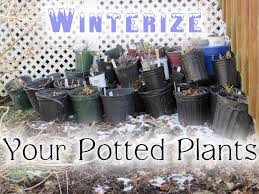 native plants for pots how to pull your potted plants through the winter