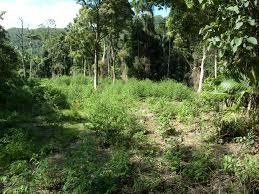 native plants in tropical rainforest rainforest emr project summaries
