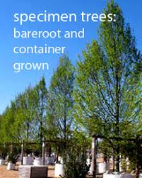 trees buy uk trees for gardens and designs