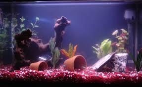 freshwater fish tank ideas
