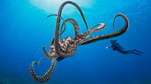 what the octopus tells us about human intelligence