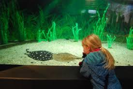 types of aquarium the shanghai aquarium schweikertsinchina